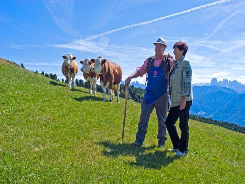 Bergwiese__Region_Klausen_